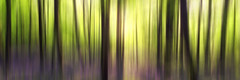 Woodland Panoramic (Kathy ~ FineArt-Landscapes) Tags: trees sunlight abstract blur colour art nature bluebells forest woods fineart creative motionblur icm