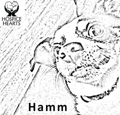 Hamm (Hospice Hearts) Tags: rescue dog cats dogs kids cat illinois feline il foster animalrescue coloring urbana felines champaign volunteer adopt nonprofit hospicehearts wwwhospiceheartsorg