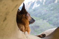 Somewhere Far Far Away (MrPuffy) Tags: germanshepherd dog cave view sitting