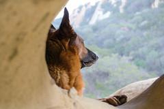 Somewhere Far Far Away (MrPuffy) Tags: germanshepherd dog cave view sitting