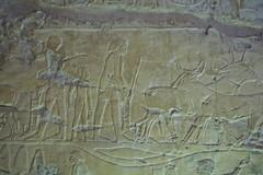 Egitto, Luxor le tombe dei nobili 136 (fabrizio.vanzini) Tags: luxor egitto 2015 letombedeinobili