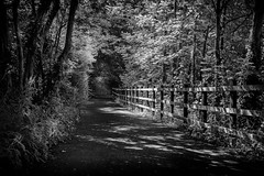 Sun and shadows river walk (Daz Smith) Tags: city uk trees portrait urban blackandwhite bw streets blancoynegro monochrome leaves canon fence blackwhite wooden bath shadows citylife thecity streetphotography bushes canon6d dazsmith