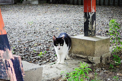 Today's Cat@2016-06-09 (masatsu) Tags: cat pentax catspotting mx1 thebiggestgroupwithonlycats