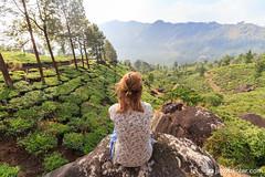 The View (Jakob Kolar) Tags: travel india green nature girl landscape women asia tea outdoor plantation indien teaplantation munar scenicview