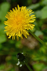 2015 05 24_d7100_0150 (swedgatch (Praying for Dad)) Tags: flowers flower color macro art nature colors beautiful beauty by photography prime photo spring nikon photographer dof angle artistic photos sweden stockholm perspective things photographs photograph tiny capture tamron 90mm d7100 swedgatch