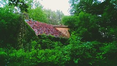 Restaurant In The Woods (Abandoned Illinois) Tags: plants building abandoned overgrown forest lost restaurant illinois vines solitude over forgotten greenery taking decrepit