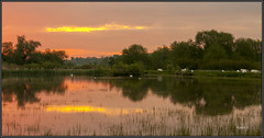 Hot Reflections.. (Picture post.) Tags: trees green nature water clouds sunrise reflections reeds landscape interestingness eau cattle ducks swans summertime paysage arbre