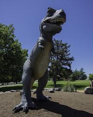 T-Rex_SAF4632 (sara97) Tags: outdoors dinosaur missouri saintlouis trex forestpark tyrannosaurus citypark urbanpark apexpredator photobysaraannefinke tyrantlizard tyrannosaurids copyright2016saraannefinke