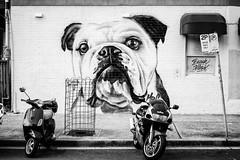 Lamrock Cafe (Leighton Wallis) Tags: dog streetart graffiti sony australia bulldog 55mm nsw newsouthwales alpha f18 bondibeach lamrockcafe mirrorless a7r emount ilce7r