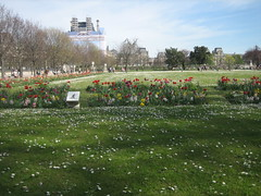 in the garden (Ladybadtiming) Tags: flowers urban paris green nature sign daisies garden spring tulips louvre sunny flowerbed urbannature tuileries bliss yacinth