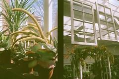 cactus x window pane (ulanalee) Tags: cactus film 35mm garden halfframe olympuspen olympuspenee3 fujisuperia fujisuperiaxtra400 penee3