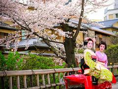 IMG_2566 (リンテイセン) Tags: japan kyoto maiko 京都 桜 日本 sakura 祇園 櫻花 さくら お花見 舞妓 白川