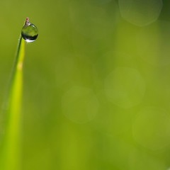 Dewdrop in the Morning Sun (Ben Wightman) Tags: macro reflection green grass square bokeh dewdrop droplet macromondays itsallaboutthenaturallight