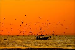 Les oiseaux. (mars-chri) Tags: costarica oiseaux pacifique chalutier ouest fabuleuse frégates plagedetarcoles