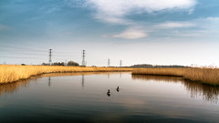 see ya.. (mark letheren photography) Tags: wales geese wetlands pylons newportwetlands vsco vscofilm