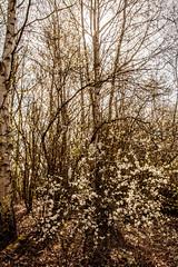 Spring (sammys gallery) Tags: widnes wiggisland