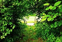 This could be paradise (Impazzire_) Tags: bridge green leaves way hope schweiz switzerland leaf paradise path dream meadow wiese dreams gras brücke somewhere blätter weg paradies irgendwo