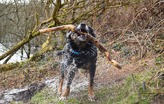 (azza2212) Tags: dogs water woods play outdoor stick
