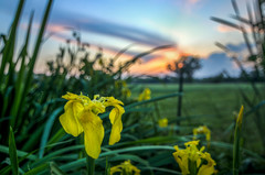 DSC_9248_50_52_tonemapped (The Real Luke Skywalker) Tags: flowers sunset italy flower nature strange field yellow clouds landscape nikon colorful italia shot angle bokeh wide pic tokina mm 16mm lombardia depth 1116 foppe masate f218 d3100
