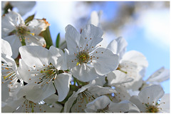 Springtime: nature calls (H. Bos) Tags: flowers nature spring close natuur lente planten bloemen springtime almere almerehaven