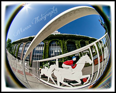 Belmont Park (EASY GOER) Tags: park horses horse ny newyork sports lensbaby race canon fun track belmont running racing fisheye 5d athletes races thoroughbred equine thoroughbreds markiii