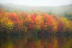 Color through the morning mist... (craigdrezek9) Tags: morning autumn trees mist lake color reflection tree fall water misty fog photography pond nikon mood moody fallcolor connecticut foggy photograph dreamy nikkor forst southington d7100