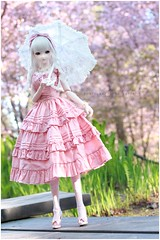 Cherry blossom dreams (sherimi-chan) Tags: doll dd dollfie volks helleborus dollfiedream takaneshijou