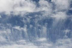 desert sky, Joshua Tree, CA (vtpoly) Tags: california plants nationalpark rocks joshuatree trails polywoda