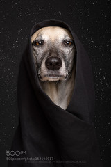 May the 4th be with you (hammockbuddy) Tags: portrait dog nerd dogs face stars photography star photo day photographer may picture 4th return jedi obi wars wan fourth nerdy 500px ifttt