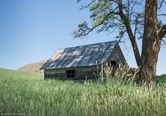 DSC_6581 (rbird1286) Tags: landscape washington barns palouse 2015
