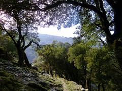 Traversal (angeloska) Tags: forest ikaria aegean greece signage oaks hikingtrails   atheras   opsikarias