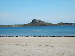 Seals Sunning (nigeltriharder) Tags: england beach sunny northumberland seal seals northeast lindisfarne basking