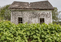 Old and New (Wen879) Tags: plants canada abandoned rotting novascotia decay kingston newlife canon24105mm canon70d