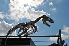 Dinosaur (carolyngifford) Tags: paris riverseine