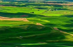 Summer Green in the Palouse (Cole Chase Photography) Tags: summer canon washington shadows farmland pacificnorthwest rollinghills palouse steptoebutte eos5dmarkiii