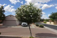 Ram/Oleander (Blinking Charlie) Tags: oleander dodgerampickuptruck phoenix arizona usa 2016 sonydscrx100m3 garage