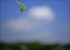 F_DSC1761-Nikon D800E-Lensbaby-Twist 60-May Lee  (May-margy) Tags: blur lensbaby clouds vines woods bokeh taiwan        taoyuancity facesinplaces     repofchina maymargy nikond800e maylee  mylensandmyimagination  naturalcoincidencethrumylens  linesformandlightandshadows twist60 fdsc1761