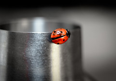 """Lady Bug Cocktail • <a style=""""font-size:0.8em;"""" href=""""http://www.flickr.com/photos/54083256@N04/16859961129/"""" target=""""_blank"""">View on Flickr</a>"""
