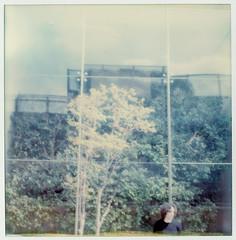 romAmor (La T / Tiziana Nanni) Tags: portrait roma film portraits polaroid sx70 luca riflessi ritratto amore impossible riflesso polaroidsx70 pellicola colorfilm istantanea iamyou polaroiders tizianananni