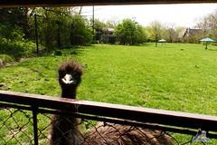Zoo Bratislava 18.04.2015 92 (Fruehlingsstern) Tags: zoo zebra giraffe bratislava br gibbon dinosaurier katta schimpanse nashorn dinosaurierpark roterpanda zoobratislava weisetiger weiselwen panasonicfz200