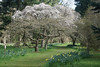 Spring has just about arrived at Thorp Perrow