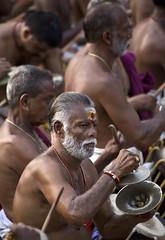 HL8A9595 (deepchi1) Tags: india elephant drums festivals horns kerala umbrellas southindia thrissur mahout pooram pachyderms drummingmusic peruvanumpooram