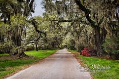 Driveway at Magnolia Gardens