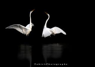 Dance in the Darkness ii
