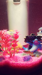 Derek the fish smiling for a photo  #neontetra (gvt16) Tags: neontetra