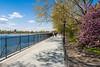 Promenade (SamuelWalters74) Tags: newyorkcity flowers trees newyork unitedstates centralpark manhattan floweringtrees jacquelinekennedyonassisreservoir centralparkinspring