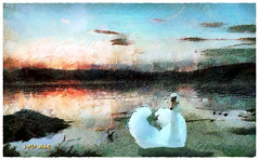 Swan Lake - Lago de los Cisnes - Cygnus (Leo Bar) Tags: lake bird art texture textura water birds sunrise painting swan artwork creative cisne compositing muteswan cygnus pondbirds awardtree leobar pixinmotion netartii