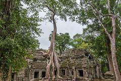 Angkor (Rubn Ugalde) Tags: nikon cambodia tomb reap angkor wat siam raider camboya d7100