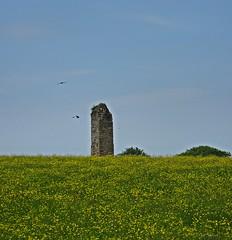 Ravenscraig (Bricheno) Tags: flowers field scotland ruin escocia szkocja schottland ayrshire scozia ravenscraig cosse stewarton  esccia   bricheno corsehillcastle scoia