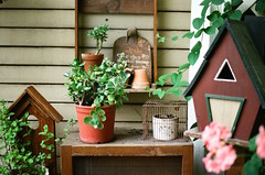 Green Houses, Wooden Frames (klolam) Tags: wood travel houses plants film tourism leaves 35mm little pentax kodak taiwan analogue pentaxmesuper birdhouses kodakfilm kodakultramax